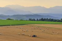 北海道 牧草ロール