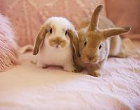 ソファの上に座るウサギ