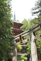栃木県 日光東照宮の石鳥居と五重塔