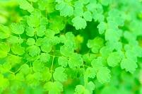 緑の葉っぱたち