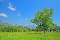 山梨県 八ヶ岳牧場と八ヶ岳