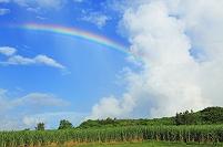 サトウキビ畑と虹 宮古島