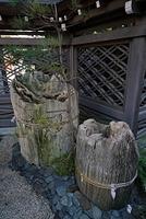 湯島天神の唐門脇の木