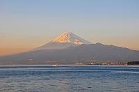 静岡県 西浦久連(くづら)