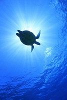海中のイメージ ウミガメのシルエット