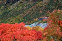 長野県 紅葉の涸沢キャンプ場