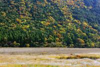 大分県 タデ原湿原の草紅葉と紅葉 長者原