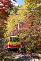 東京都 紅葉の高尾山とケーブルカー