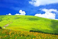 長野県 ニッコウキスゲ咲く霧ヶ峰高原
