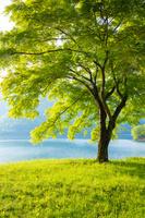 東京都 奥多摩湖の新緑