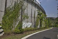 環状八号線 擁壁の緑化