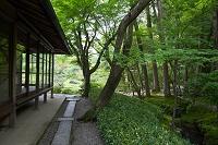 奈良県 奈良市 依水園