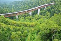 北海道 樹海と松見大橋