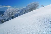 三重県 鈴北岳の樹氷