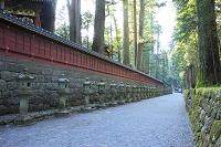 栃木県 日光二荒山神社 上新道と石灯籠