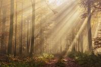 日差しの森
