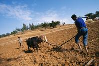 エチオピア 北部 耕作作業