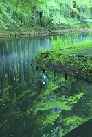 岩手県 中尊寺 弁財天堂周りの池