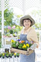木箱のパンジーを持った笑顔のシニア日本人女性