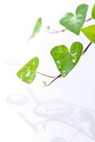 水滴とハートの葉