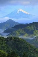 静岡県 葛城山林道 残雪の富士山と新緑の山並み