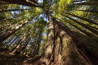 カナダ バンクーバー島 森