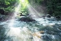 光降り注ぐ新緑の渓流