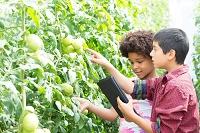 トマトを観察する子供