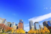 東京都 黄葉の銀杏並木と丸の内の高層ビル群