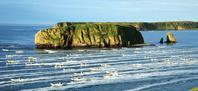 北海道 アゼチの岬を出漁する昆布船