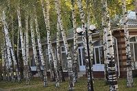 キルギス 白樺とロッジ