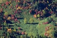 長野県 秋の志賀高原