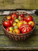 かごに入ったさまざまなトマト