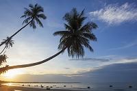 ベトナム ムイネービーチとヤシの木