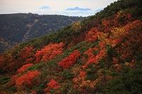 長野県 蝶ヶ岳稜線樹林 大滝山 山梨県 富士山 甲斐駒ケ岳
