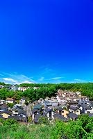 東京都 新緑と住宅