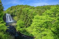 静岡県 新緑の音止の滝