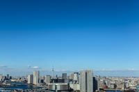 豊洲のビル群と東京スカイツリー