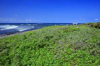 山口県 夢ヶ崎の海浜植物と夢崎明神 角島