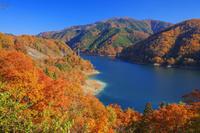 福井県 紅葉の九頭竜湖 夢のかけ橋(箱ヶ瀬橋)