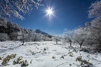 長野県 雨氷の森