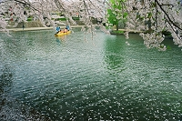 岐阜県 春の水門川と観光船