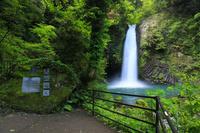 静岡県 新緑の浄蓮の滝と「天城越え」歌碑