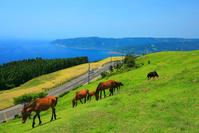 宮崎県 初夏の都井岬と野生馬