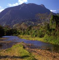 マダガスカル マロジェジ国立公園