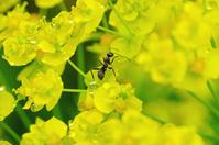 蟻のオアシス