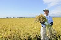 稲穂を抱える農夫