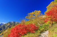 長野県 紅葉の八方尾根より五竜岳