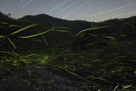 源氏蛍の光跡