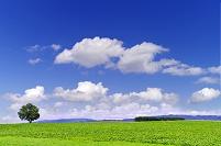 北海道 一本の木がある丘